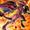 Red Nova Dragon